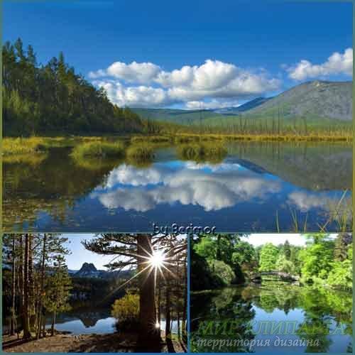 Многообразные фото изящные рек