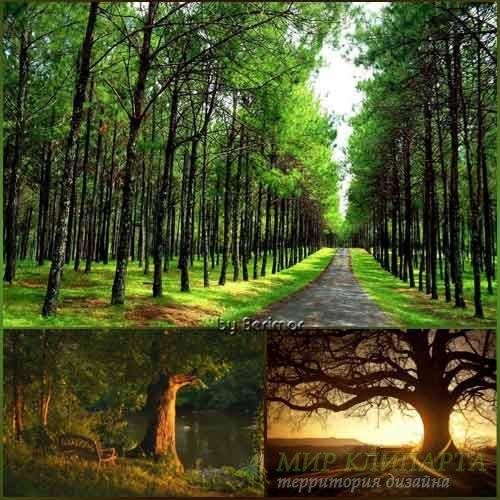 Деревья отличные и чудные фото