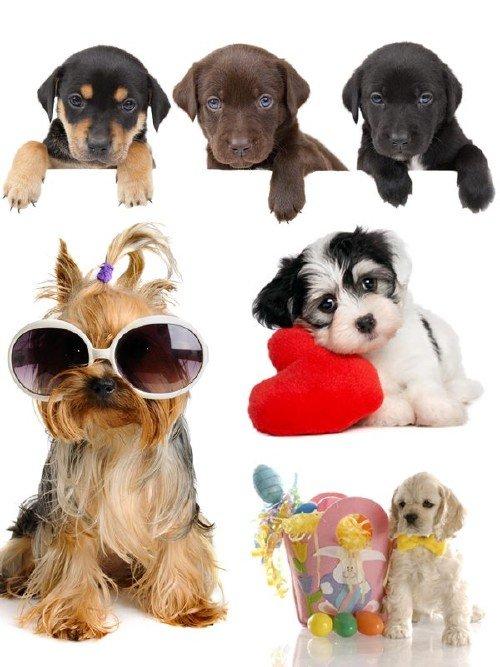 Очаровательные щенки (подборка изображений)