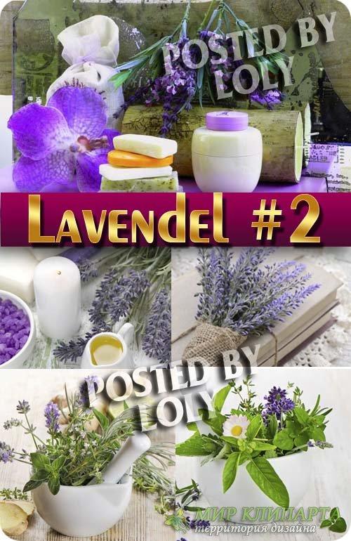 Цветы Лаванды #2 - Растровый клипарт