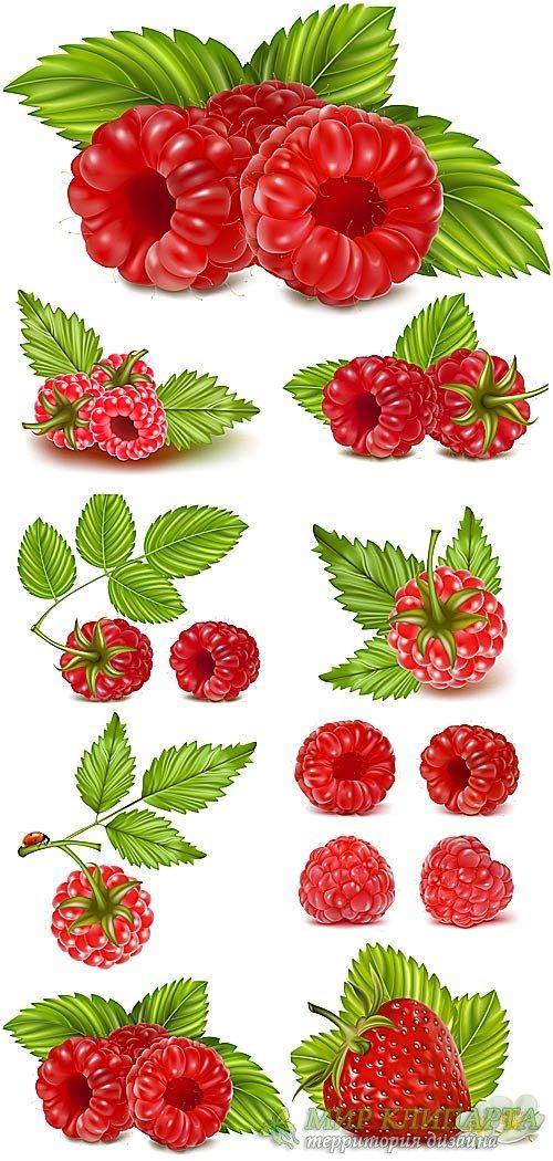 Малина, клубника в векторе / Raspberry, strawberry vector