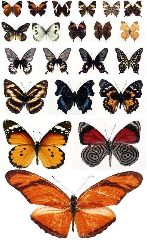 Бабочки и мотыльки (большая подборка растрового клипарта)