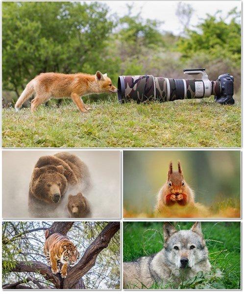 Веселые картинки с животными для фона рабочего стола 94