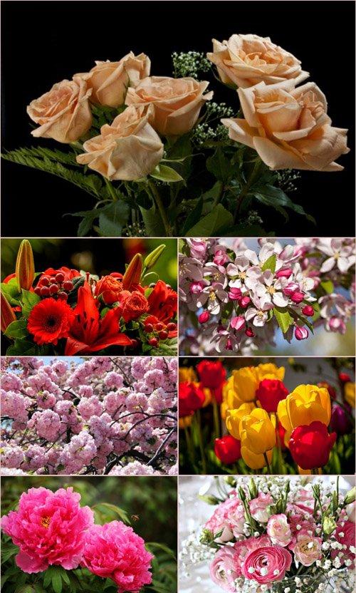 Обои для рабочего стола красивые цветы (Часть 7)