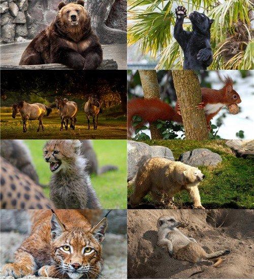 Новый сборник в фотографиях  животных для рабочего стола
