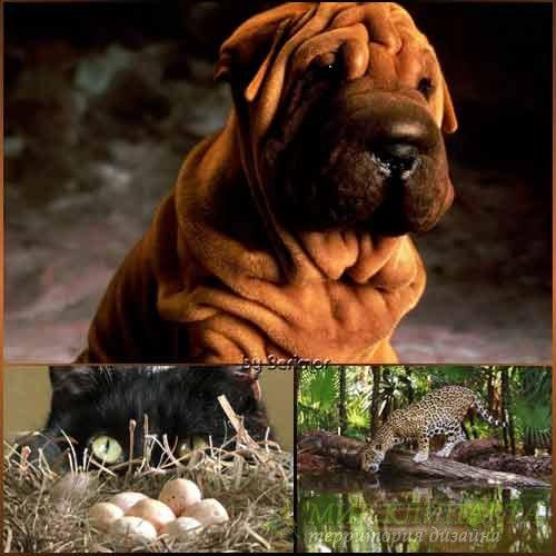 Фото разнообразных и интересных животных
