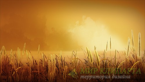 Футаж  Field of Gold HD