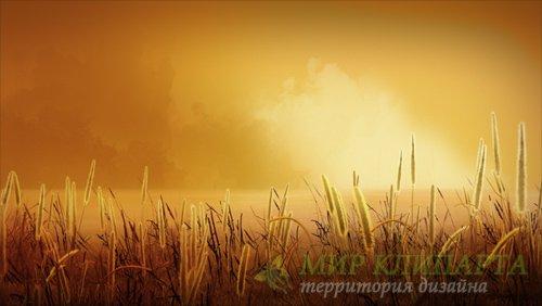 Футаж  Field of Gold HD