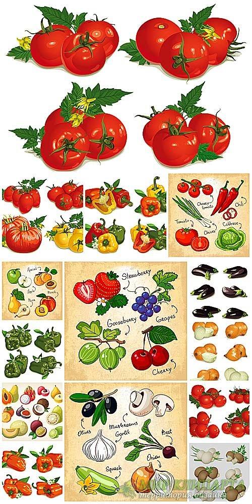 Овощи, фрукты и ягоды в векторе / Vegetables, fruits and berries vector