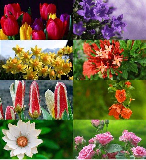 Подборка красивых цветов в фото отличного качества обои