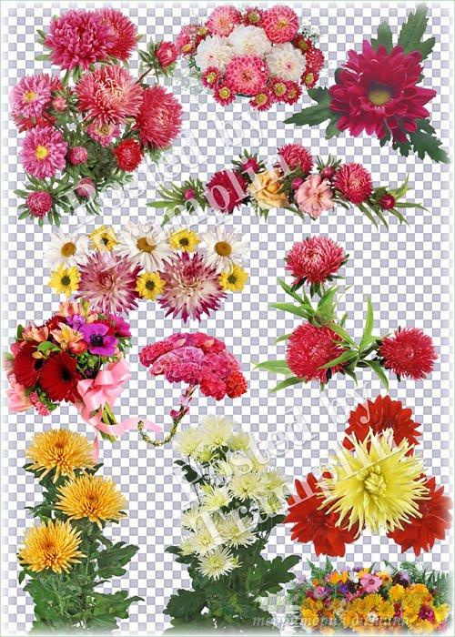 Цветы на прозрачном фоне – Астры, герберы, ромашки