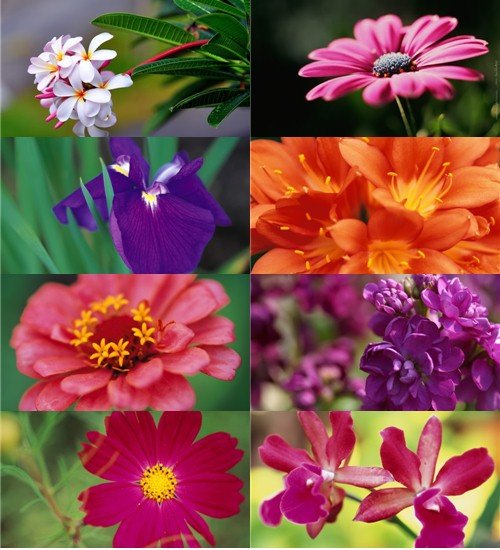 Подборка фото красивых цветов хорошего качества