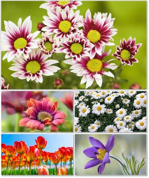 Цветы в сборнике обоев для рабочего стола 43