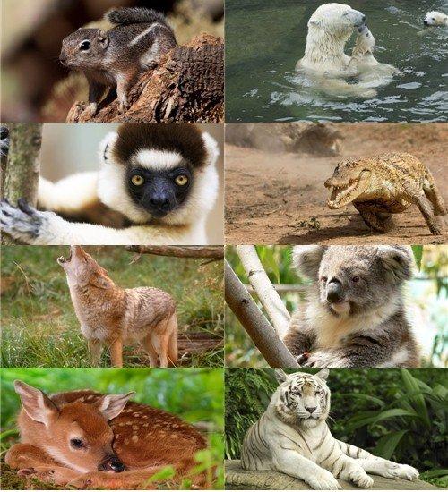 В фотографиях сборник для рабочего стола обоев животных