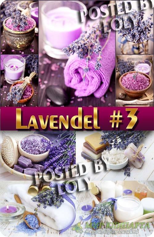 Цветы Лаванды #3 - Растровый клипарт
