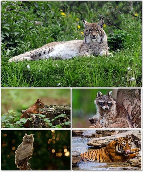Веселые картинки с животными для фона рабочего стола 99