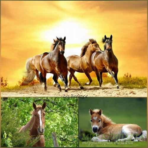 Привлекательные лошади на разнородных фото