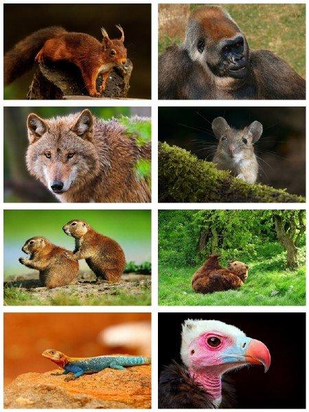 В фотографиях подборка животных собрание для рабочего стола выпуск 63