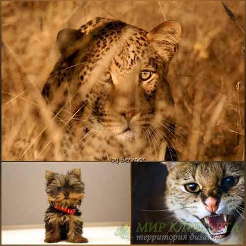 Фото разнородных и интересных животных