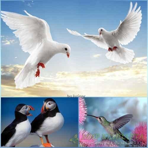 Отменные птицы на ошеломляющих фото