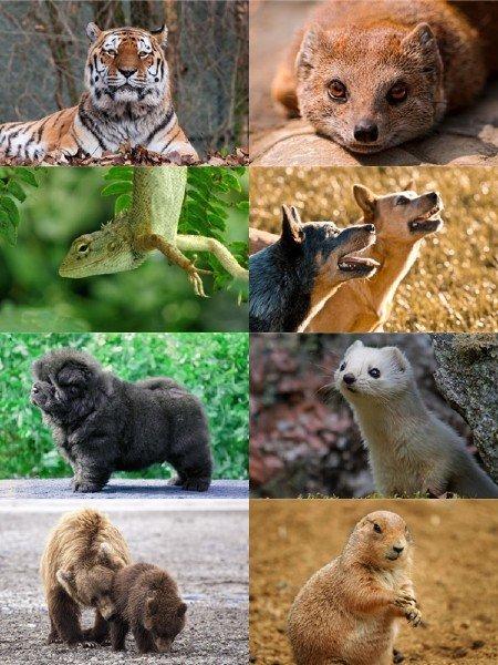 В фотографиях сборник животных подборка для рабочего стола выпуск 64