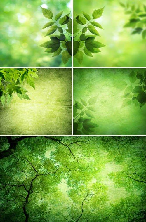 Зеленые листья лета