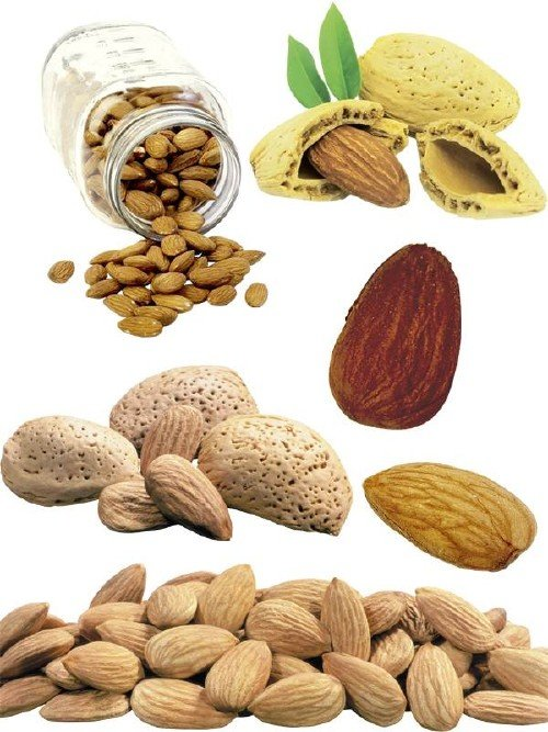 Орехи: Миндаль (подборка изображений)