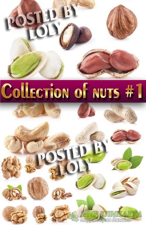 Еда. Мега коллекция. Орешки #1 - Растровый клипарт