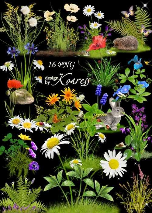Цветочные png кластеры для фотошопа с луговыми и лесными цветами - Цветочна ...