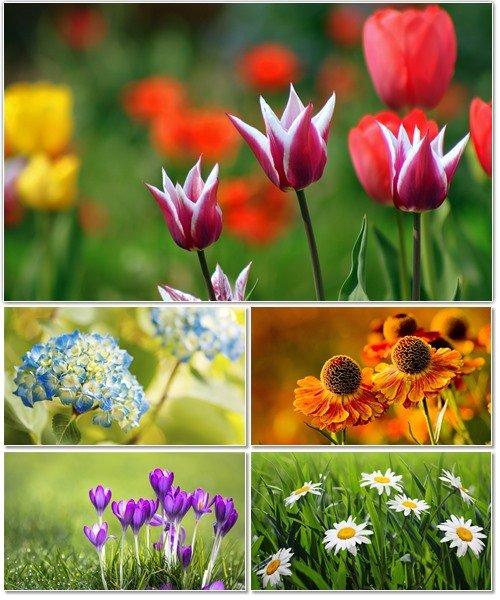 Цветы в сборнике обоев для рабочего стола 48
