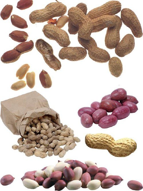 Орехи: Арахис (подборка изображений)