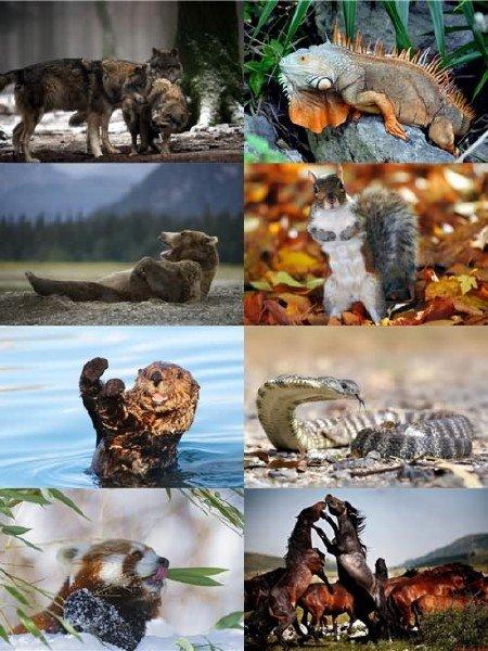 В фотографиях для рабочего стола сборник обоев животных выпуск 66