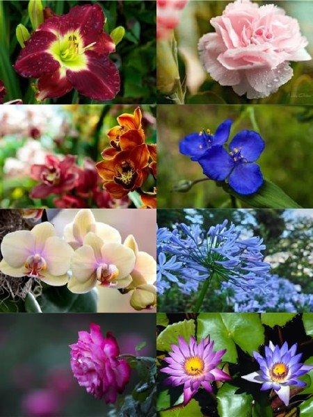 Сборник чудесных фото цветов отличного качества выпуск 31