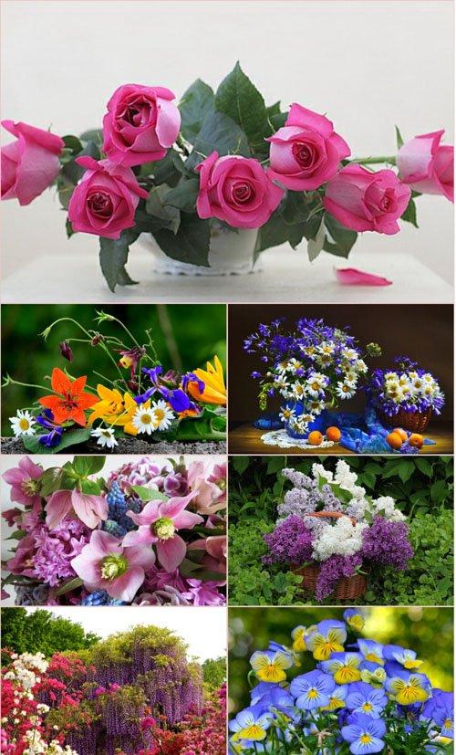 Обои для рабочего стола красивые цветы (Часть 11)