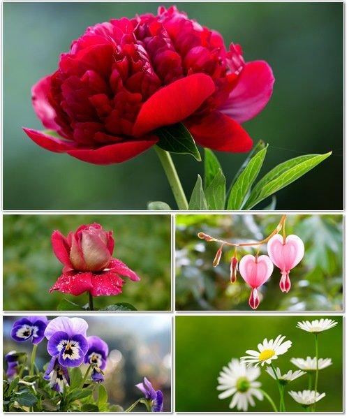 Цветы в сборнике обоев для рабочего стола 49