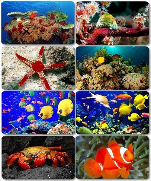 Рыбы и животные морских глубин - Обои на рабочий стол