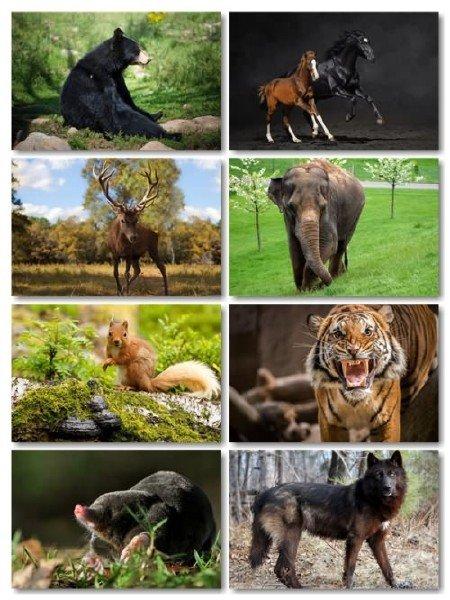Сборник фото отличного качества животных выпуск 67