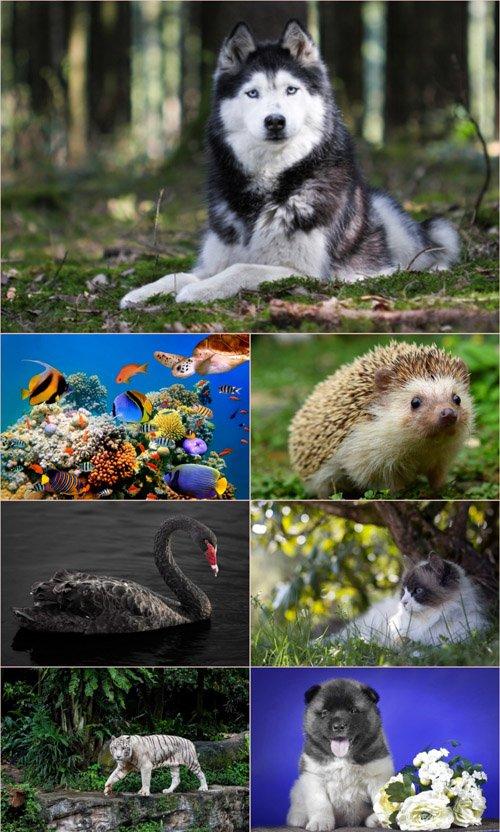 Обои для рабочего стола Животный Мир (Часть 6)
