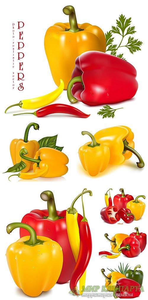 Сладкий и острый перец в векторе / Sweet and hot peppers in vector