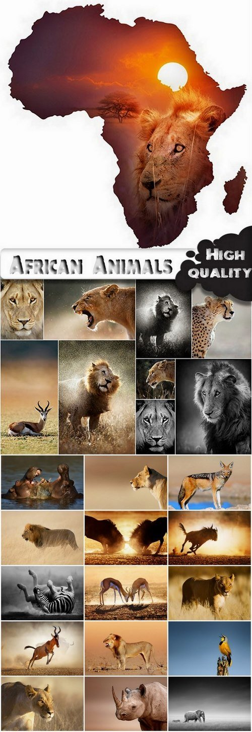 Amazing African Animals Stock Images - 25 HQ Jpg