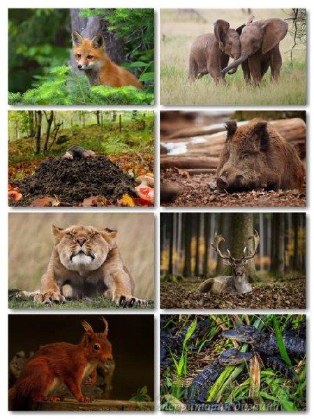 Сборник обоев в фото хорошего качества животных выпуск 68