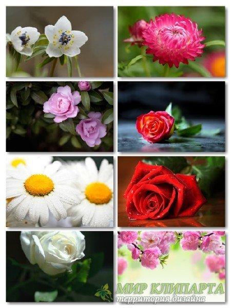 Коллекция прекрасных фото цветов для рабочего стола выпуск 33
