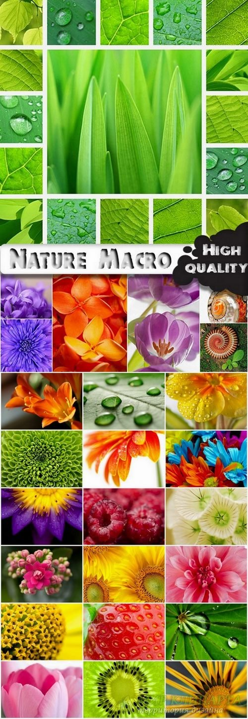 Nature Macro photography stock images - 25 HQ Jpg