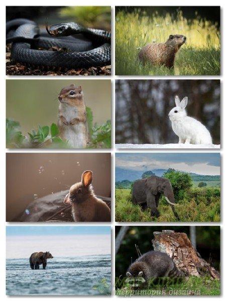 Подборка хорошего качества животных в фото на рабочий стол выпуск 69