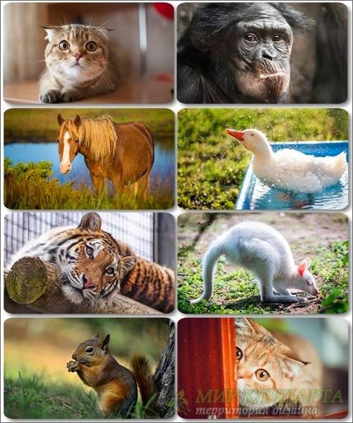 Забавные животные - Коллекция фото обоев (часть 28)
