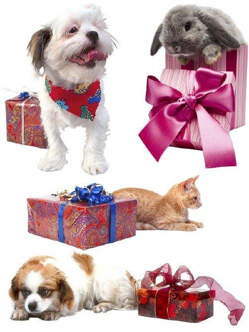 Коты, собаки, кролики и подарки (подборка клипарта)