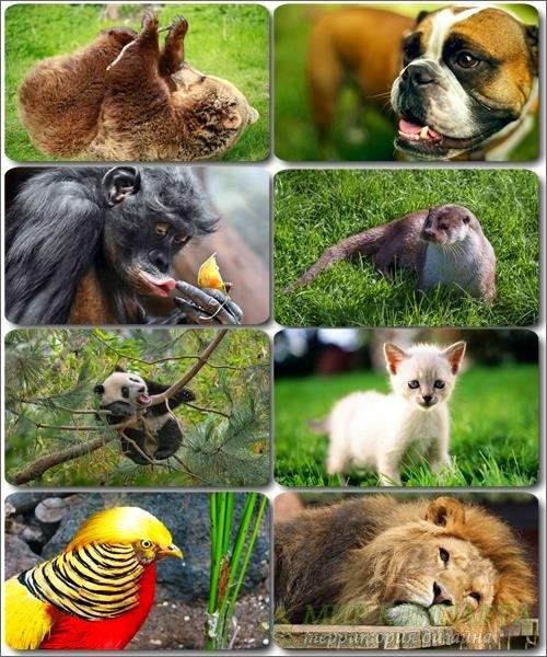 Забавные животные - Коллекция фото обоев (часть 30)