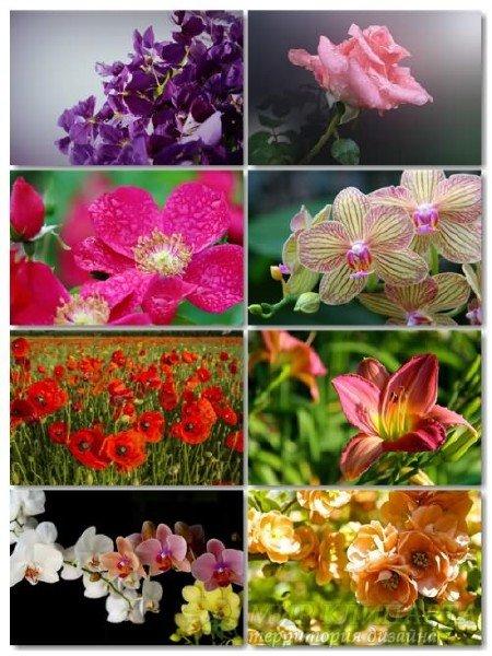 Коллекция прекрасных фото цветов для рабочего стола выпуск 35