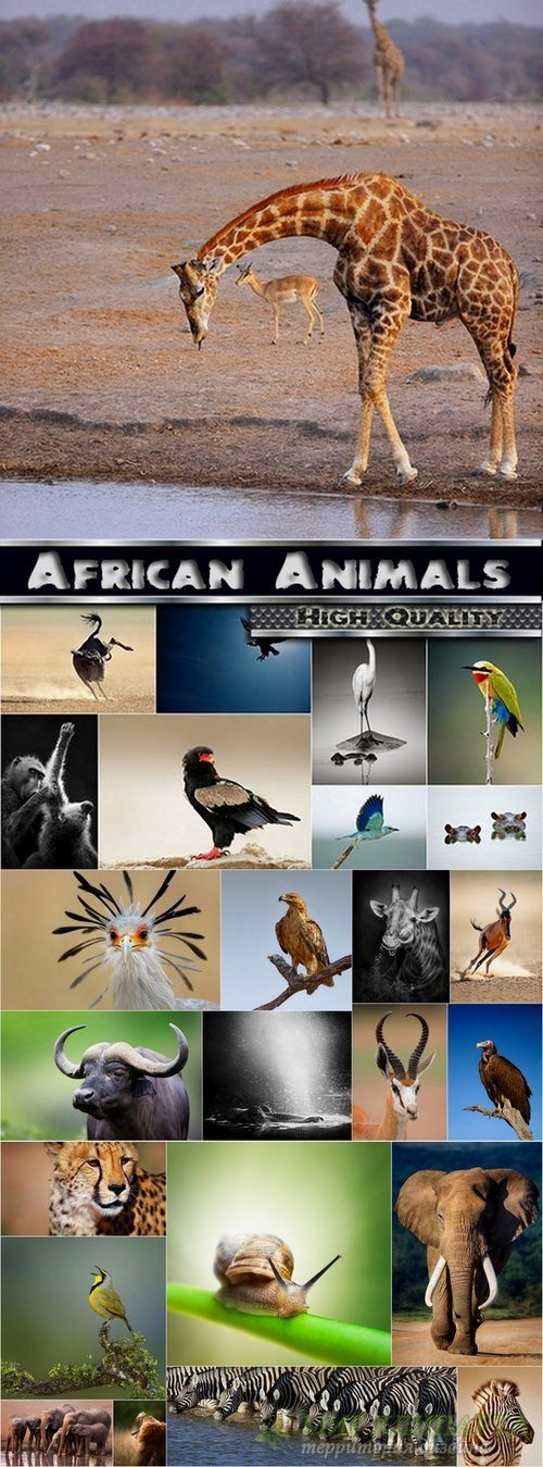 Amazing African Animals Stock Images #2 - 25 HQ Jpg