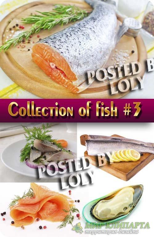 Еда. Мега коллекция. Рыбка #3 - Растровый клипарт